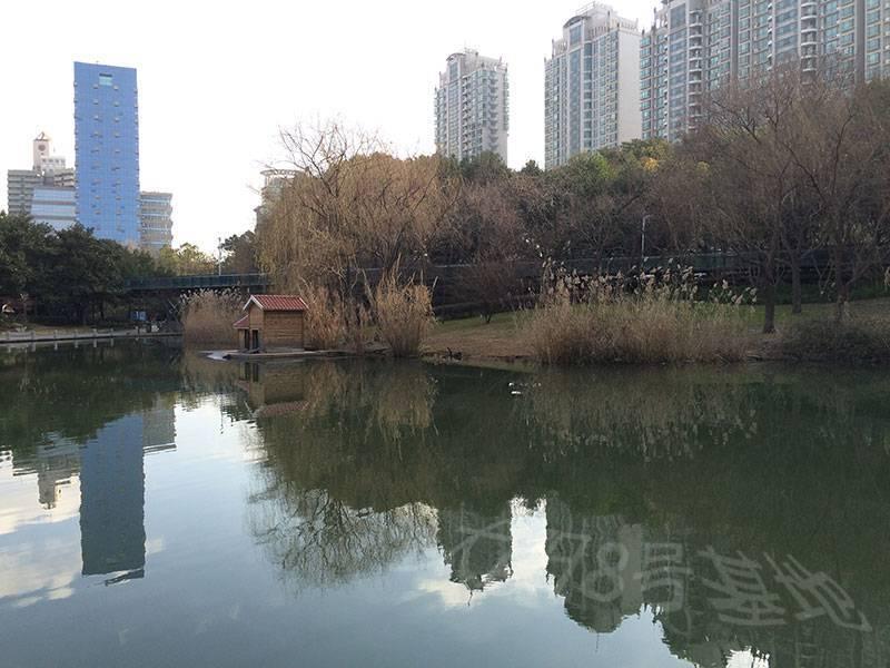 早晨九点,徐家汇公园的人工湖,一片宁静